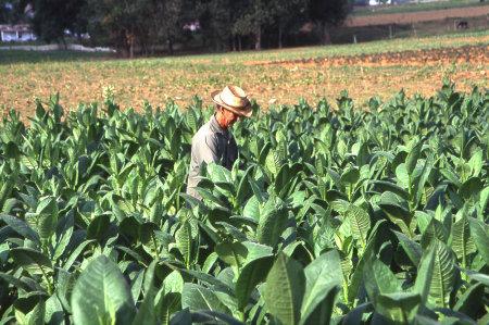 Milde Zigarren aus Kuba und der Dominikanischen Republik